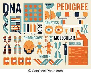 biologie, molekular