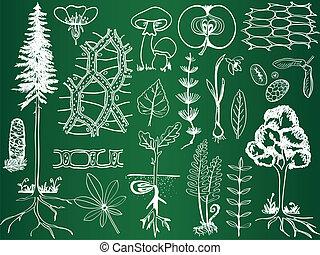 biologie, plant, schetsen, op, school, plank, -, plantkunde,...