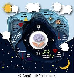 biologisk, infographics., mänsklig, klocka