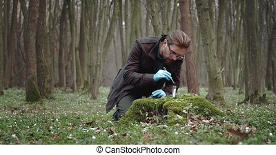 Biologist in rubber gloves taking part of moss for studying...