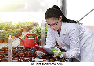 Biologist with sprouts in greenhouse - Young woman in white ...