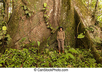 Biologist Woman Nest To A Kapok Tree