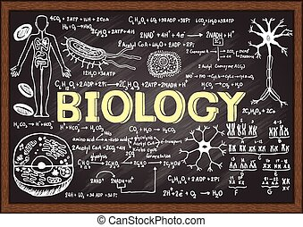 Biology on chalkboard - Hand drawn biology on chalkboard.