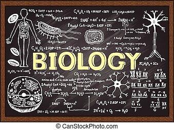 Biology on chalkboard - Hand drawn biology on chalkboard.