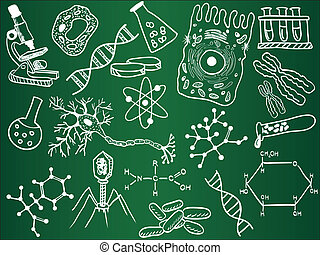 Biology sketches on school board. Vector illustration.