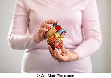 Selective focus of a human heart model