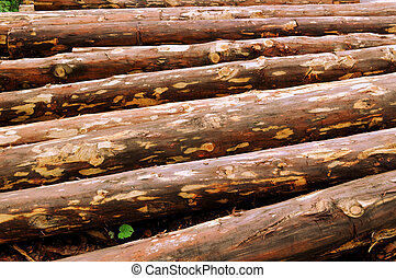 Biomass material - Trees for combustion in a biomass...