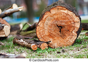 Biomass - A staple of biomass, arranged firewood.