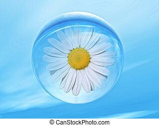 biosphere - daisy flower inside a water bubble