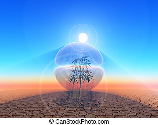biosphere - plant inside  a bubble in the desert