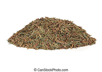 Biota herb leaf sprigs used in traditional chinese herbal medicine isolated over white background. Ce bai ye. Cacumen biotae orientalis.