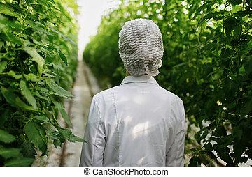biotechnológia, nő, konstruál, megvizsgál, berendezés, levél növényen, helyett, betegség, alatt, melegház