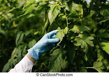biotechnológia, nő, konstruál, megvizsgál, berendezés, levél növényen, helyett, betegség