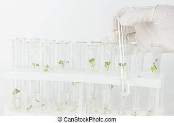 biotechnological, laboratoire, recherche