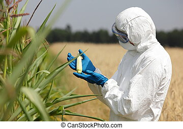 biotechnology engin examining corn - scientist examining...
