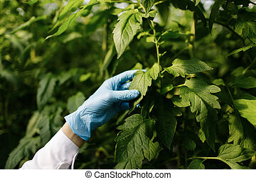 biotecnología, mujer, ingeniero, examinar, planta, hoja, para, enfermedad