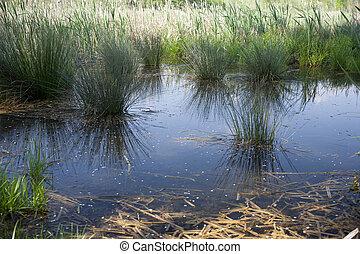 Biotope, resurgences of Flambro - View of Biotope,...