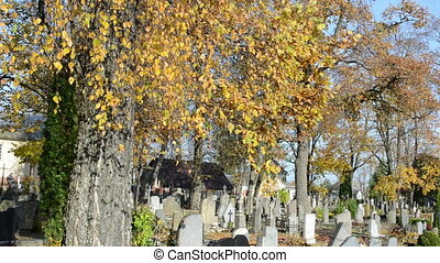 birch autumn cemetery
