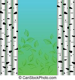 Birch background