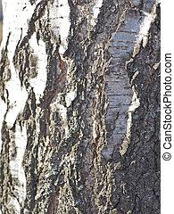 Birch bark. background