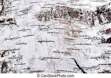 Birch Bark Close-up