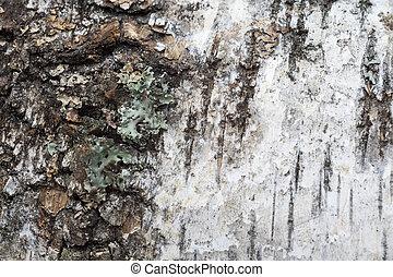 Birch Bark Macro