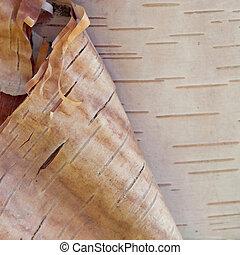 Birch bark - Peeled birch bark