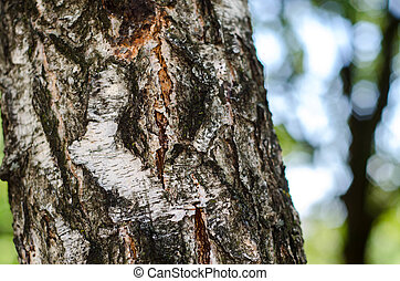 Birch bark texture background paper