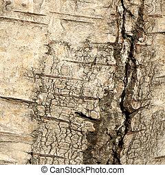 Birch bark texture.