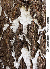 Birch bark white with black, a natural background