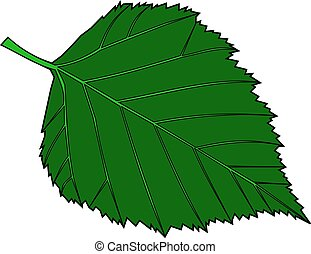 birch, Betula verrucosa, vector, isolated birch leaf,