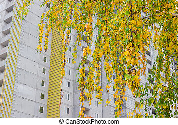 Birch branches on a background of the construction autumn