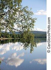 Birch by a lake