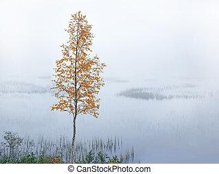 birch by river in autumn