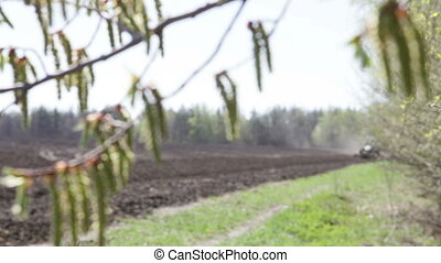birch catkins swaying in front of a tractor plowing a field