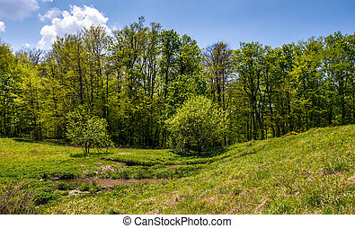 birch forest on grassy slope. lovely springtime nature...