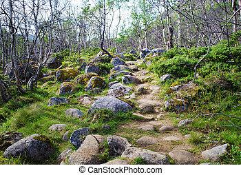 Birch Forest Path