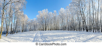 Birch grove in hoarfrost against blue sky, picturesque...