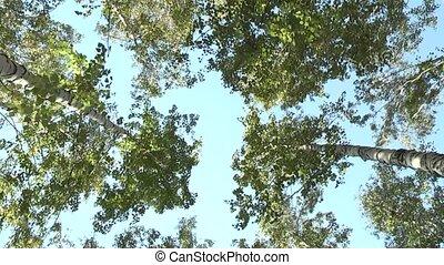birch grove.