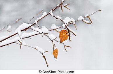 Birch in a snow