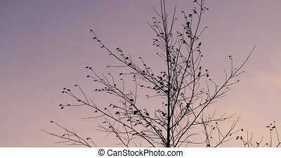 birch in autumn on a background of the sky