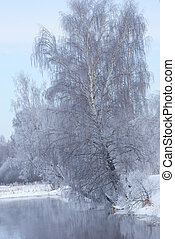 Birch is the water in the winter.