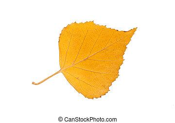 Birch leaf
