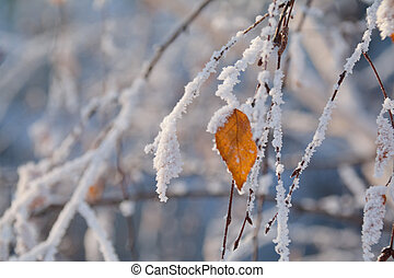 birch leaves and branches in the frost