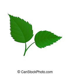 Birch Leaves Illustration