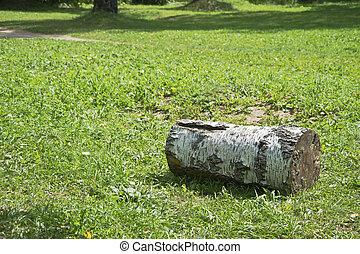 birch log on a glade