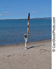 Birch Log Planted on Sand Beach