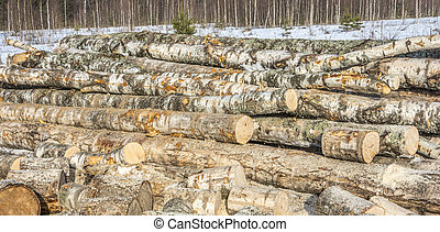 Big bunch of birch logs turning into firewood.