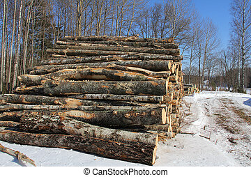 Birch Logs in Winter
