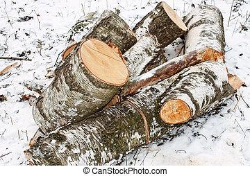 Birch logs on the snow